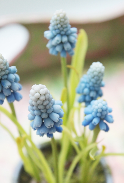 цветы из глины, мускари, крокус