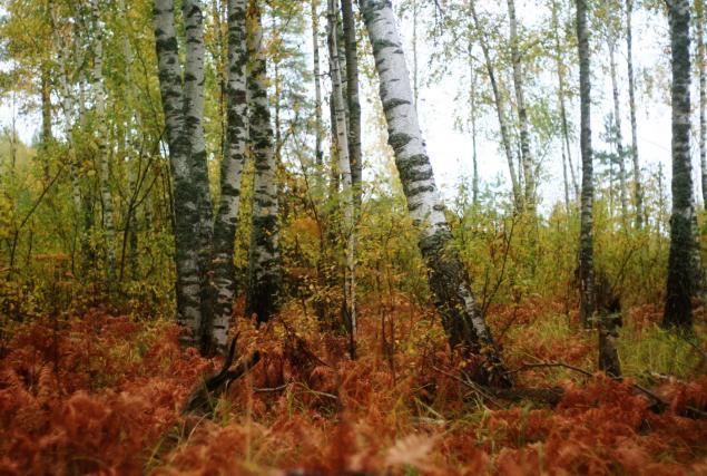 Русские края, фото № 1