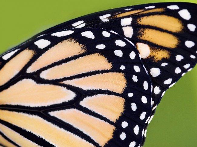 бабочки, шарфик, печать