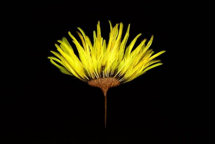 Australian Aboriginal Hairpin