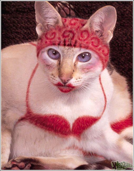Зачем красить кошек?, фото № 24