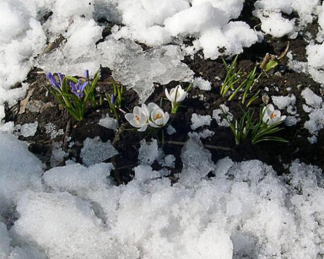 Весна картинки проталинки