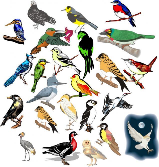 Картинки много птиц на одной картинке
