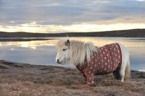А пони - тоже кони!, фото № 2