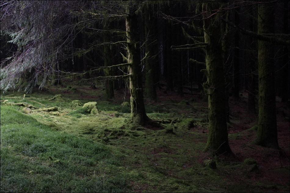Страшная картинка леса