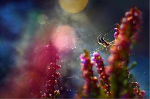 фотографии насекомых