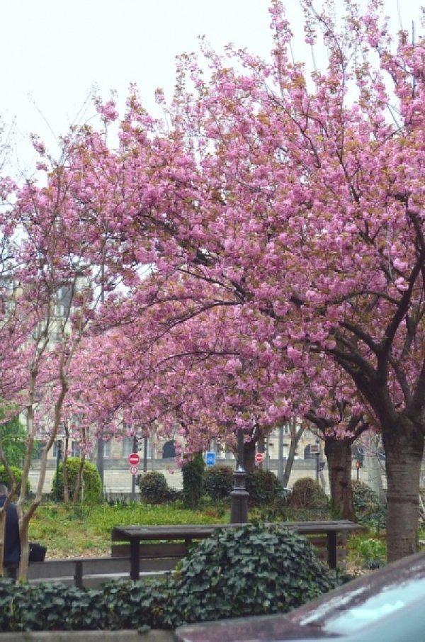 Весенний Париж, дыхание теплого ветра, фото № 20
