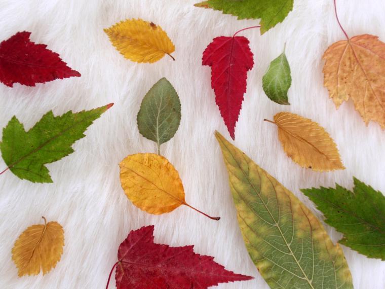 осень, листики, листочки, гербариум