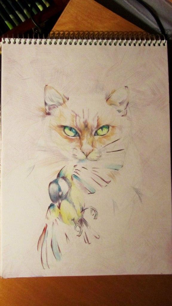 этапы, кошки, синица, цветные карандаши