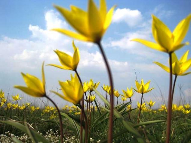 природа, цветочный