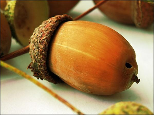 Как сделать из желудей кабана