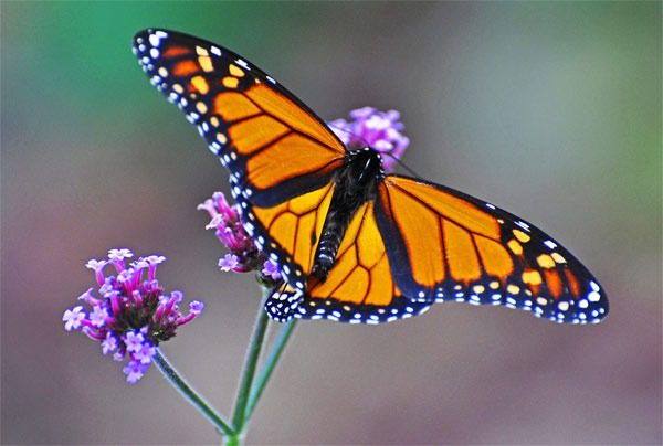 Самые большие и красивые бабочки