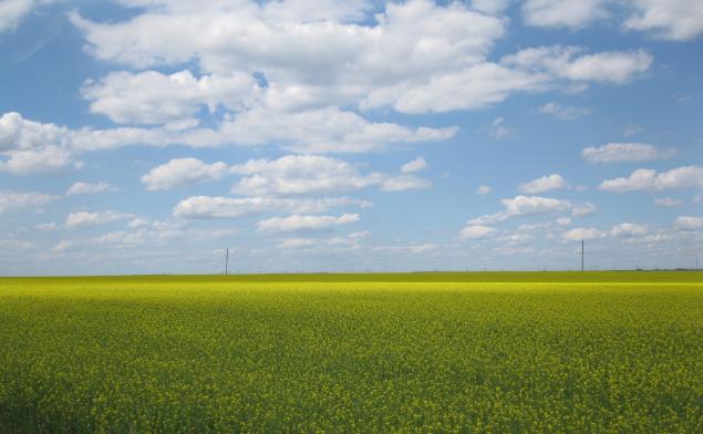 лето, заготовка трав, красота