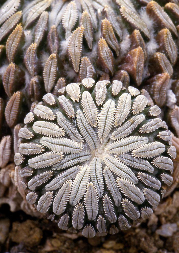 коллекционые растения