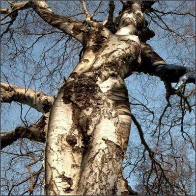 Bilo jednom jedno drvo - Page 2 120919173854