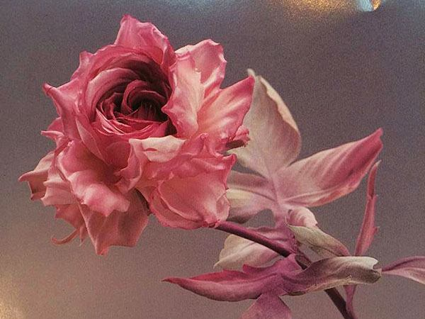 выставка, цветы из ткани