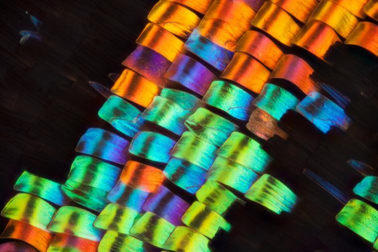 бабочка, подарок, печать на ткани
