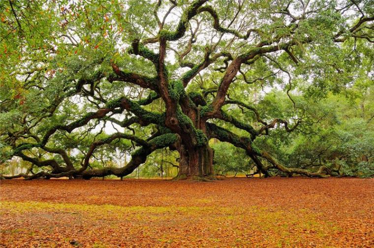 гороскоп, друиды, гороскоп друидов, лес, лесные жители, характер, черты характера, склонности, способности, дерево, моё дерево, растения, зелёный, дуб, жёлуди, весна, март, персональная запись, блог, деревья