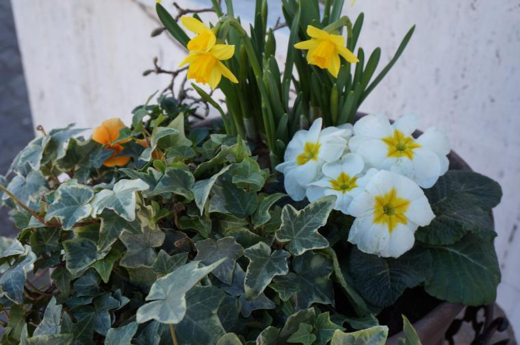 8 марта, поздравление, праздник, первоцветы, тюльпаны, женский праздник, женский день, женщина, букет