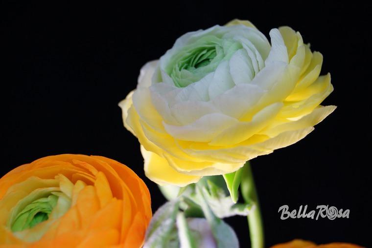 лепка, белла роза