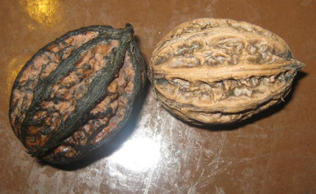 ксения семенча