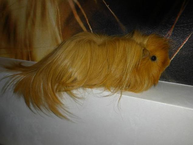 Если нет кисточки чем можно покрасить волосы