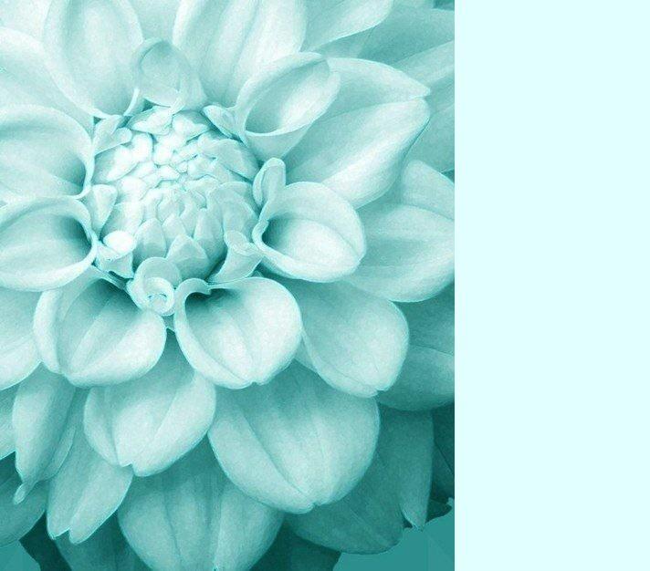 голубой цвет, василёк