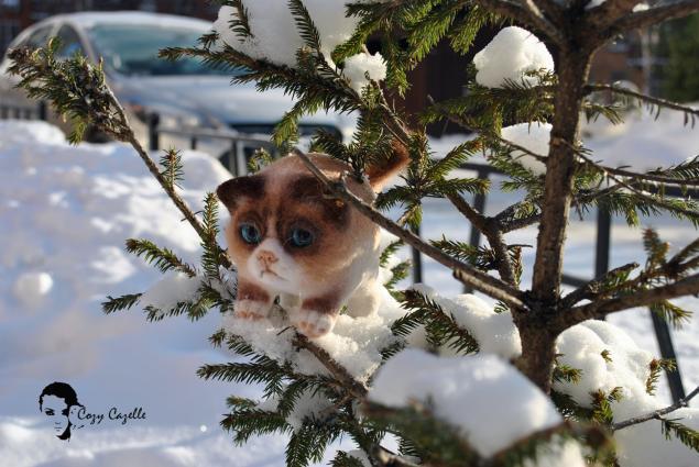 шерстяные нравы, коты на прогулке