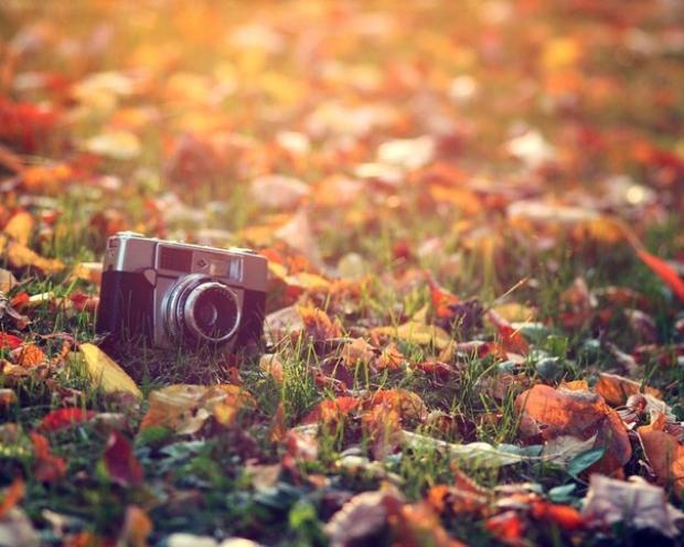 осень, бокалы