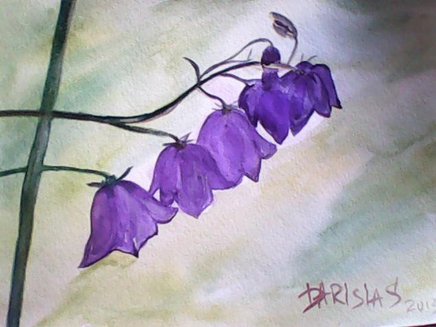 цветы, картина в подарок
