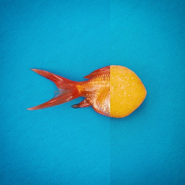 goldfish + goldfish®. fish is alive and back in the tank. cracker is in my belly. #combophoto #goldfish #fish #vsco #vscocam