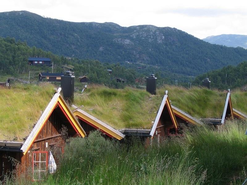 зеленая крыша