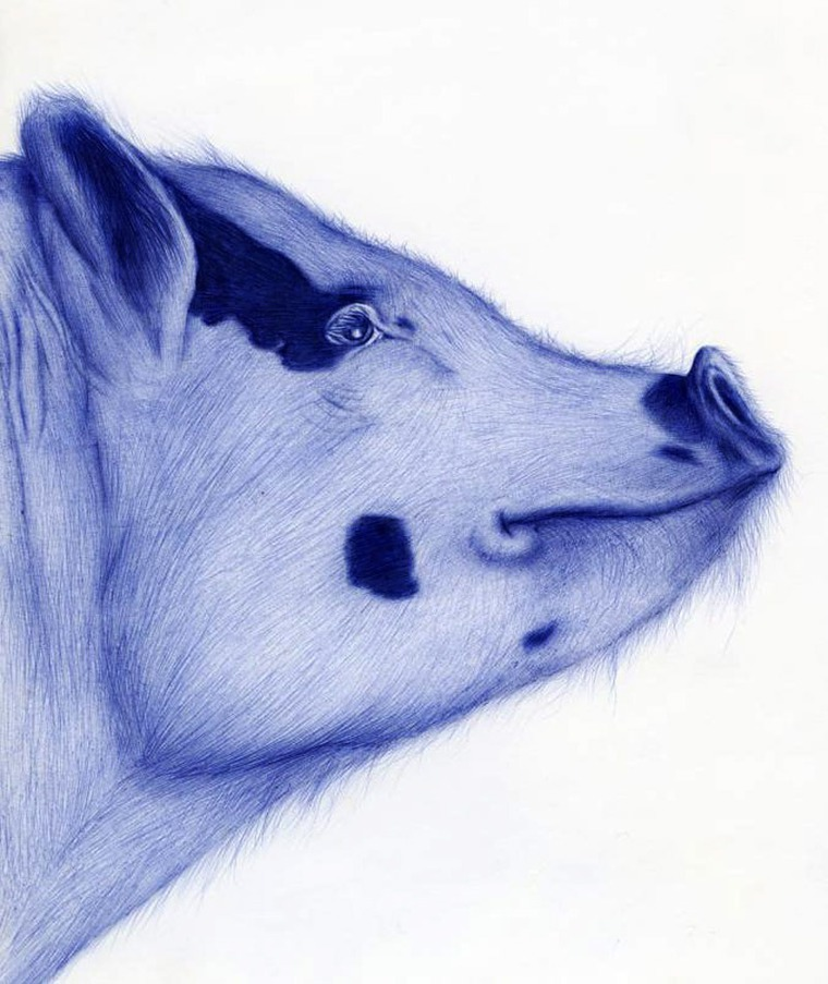Рисунки животных ручкой легкие