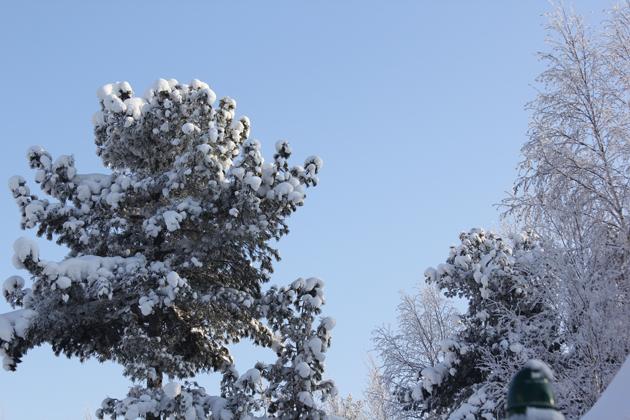 сургут, детская площадка, елка