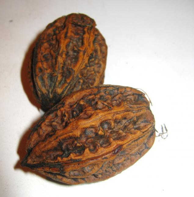 маньчжурский орех, поменяю