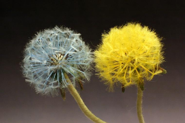 ацикулярис, мастер-класс по валянию, цветы