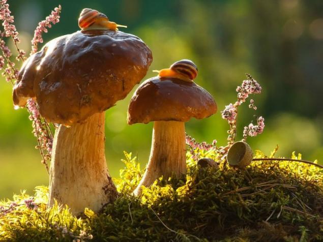 лес, грибы, улитки, картина по фото, аукцион