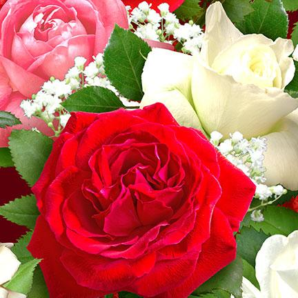 новые поступления, розы