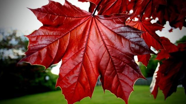 осень, декор дома