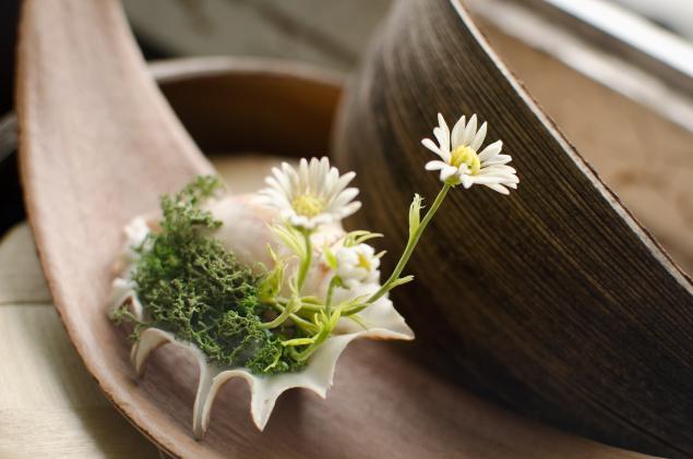 цветы из fleur, ракушка