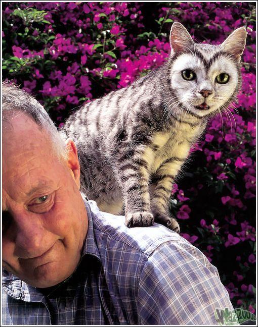 Зачем красить кошек?, фото № 13