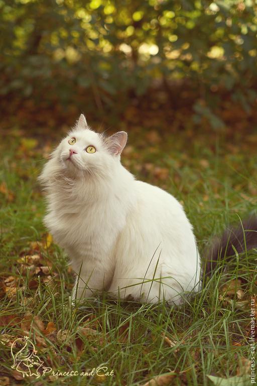 фотокартина, осень, картина