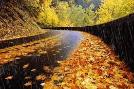осень, мысли, дождь