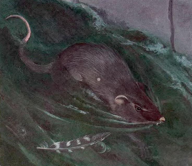 Гадкий утёнок (1955) фото: скриншоты КиноПоиск