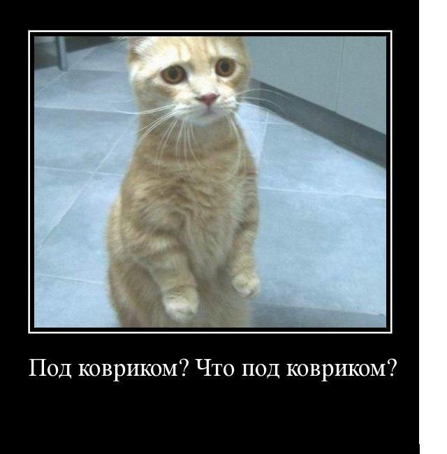 картинка не верь коту его кормили бояться