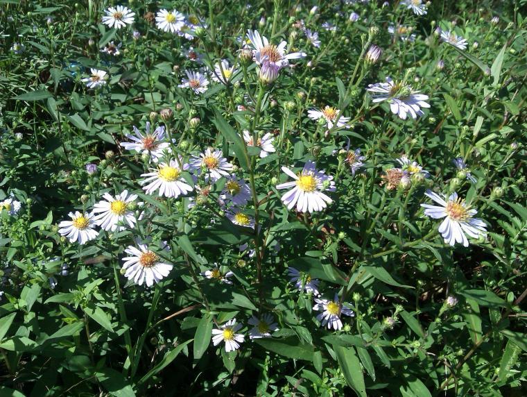 садовые цветы фото