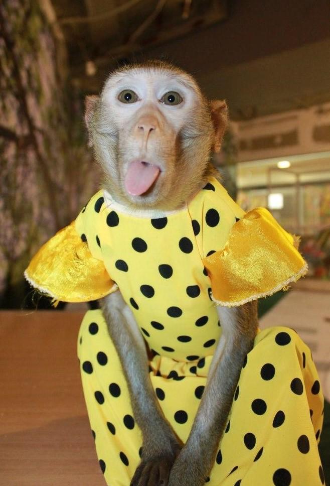нарядная обезьянка картинки любимое место
