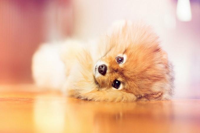 милый пёс