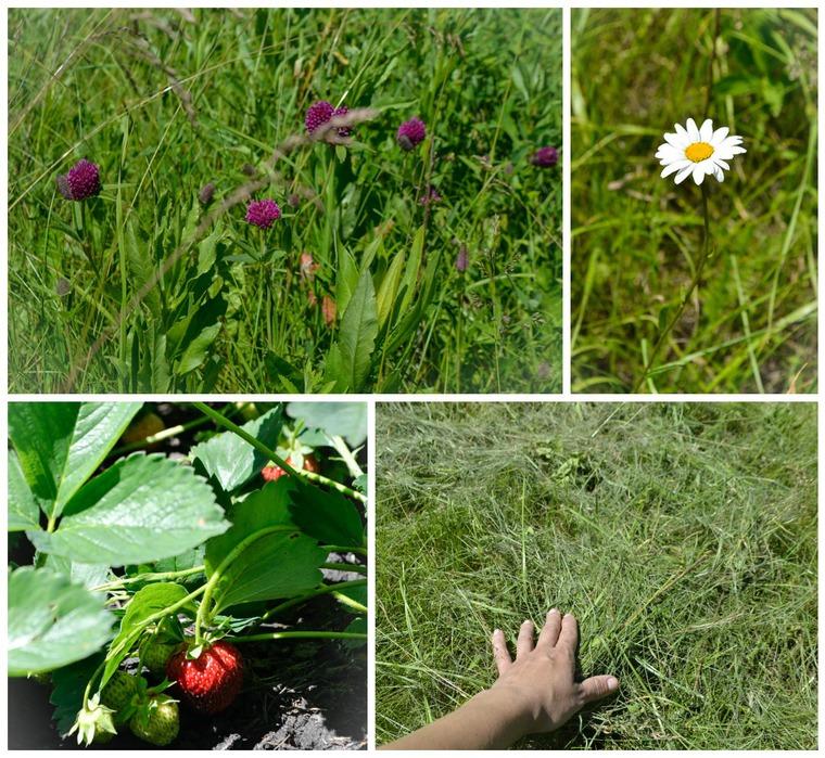 ягодная пора, трава, сено, народная кукла, ириша колпакова