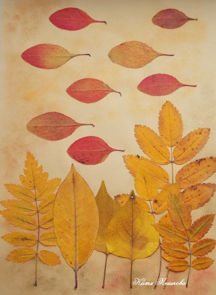 мечтал фото гербария из осенних листьев высокими